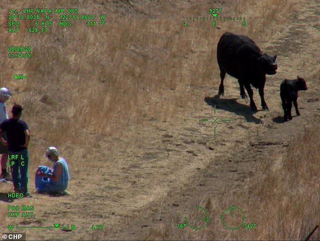 An elderly couple were injured on Sunday when they were chased by a cow at the Lynch Canyon Regional Park in Solano County, northeast of San Francisco
