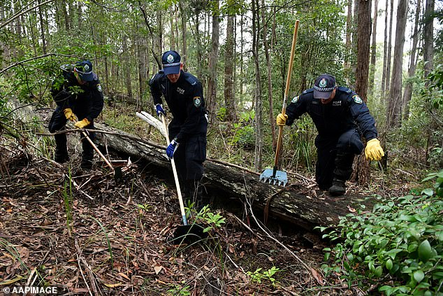Search teams looking for evidence in the William Tyrrell case with NSW Police searching bushland