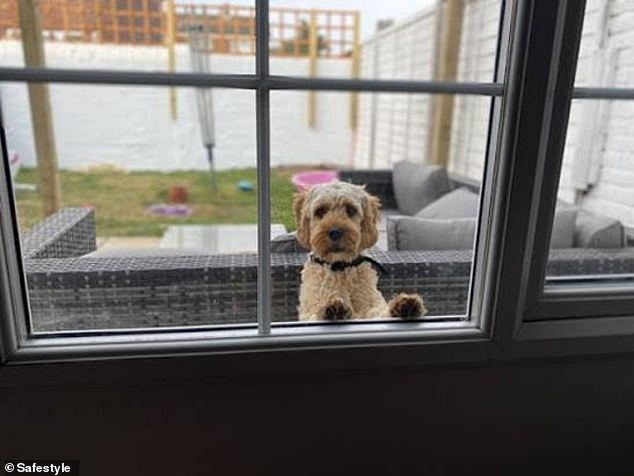 Pancake from Folkestone sits in the garden and ponders what's happening inside. Pancake's owner, Layla, captioned this with: 'Our dog Pancake looking at 2020 like¿'