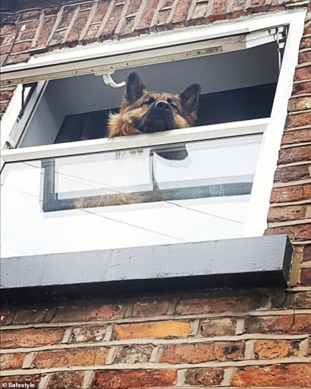 This adorable pooch, from an unknown UK location, stuck his head out of the window much to the amusement of his family