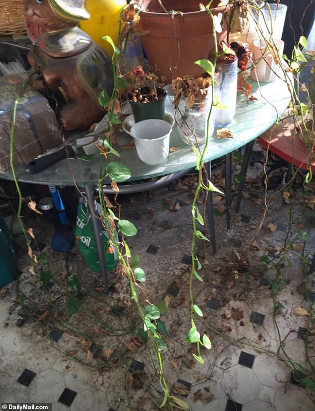 'His kitchen table looked like an unkempt outside porch, there were plants that had grown around the table legs and into the floor,' the woman added