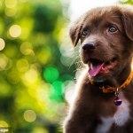 Labrador puppy found dead in backyard in Freshwater, Sydney's Northern Beaches
