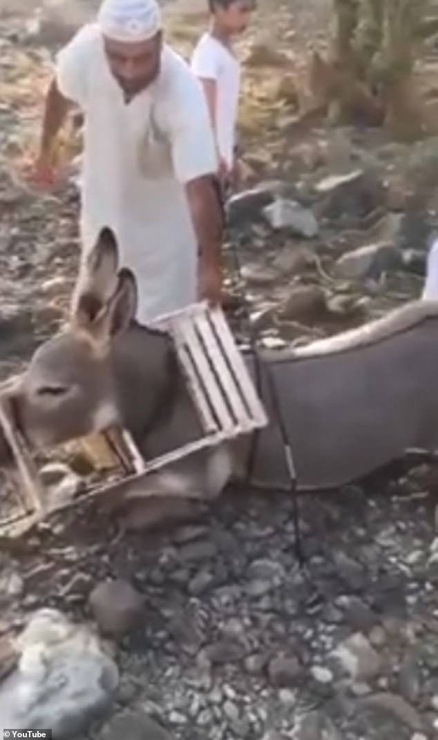 Locals struggle to free the injured donkey which was spotted with its head stuck in a plastic chair in the UAE