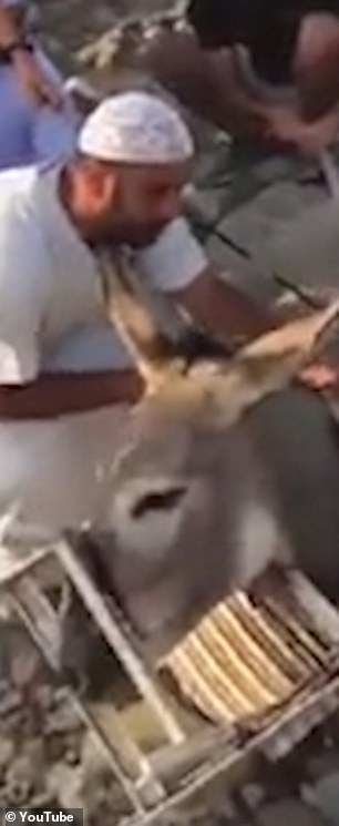 The animal was trapped by its head and neck in a plastic chair
