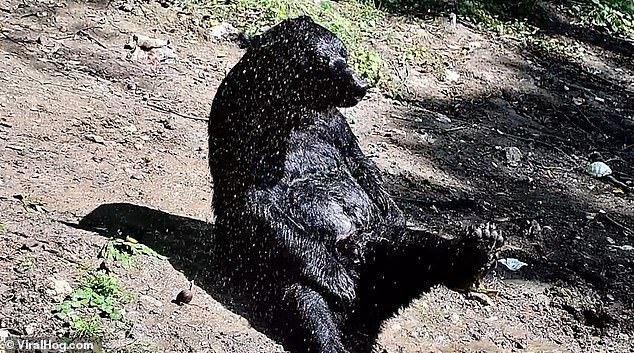 Toshka regularly enjoys showers in the sun, according to his caretaker, who said it was his 'favourite pastime'