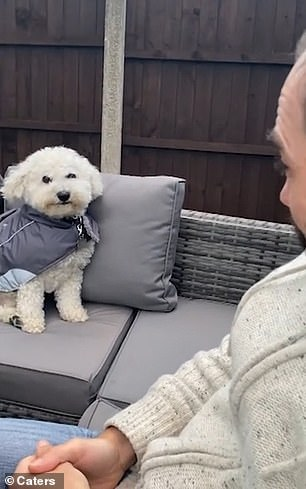 Buddy, a six-year-old Bichon Frise, knows he gets a positive response when he shows his teeth, according to his owner