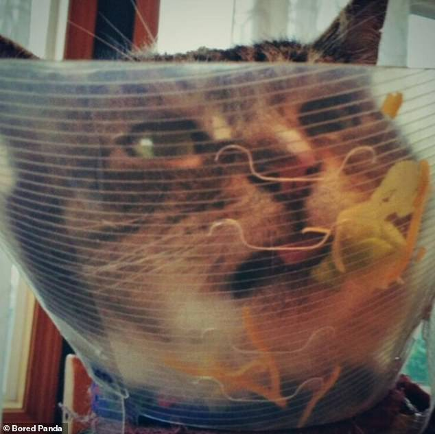Order up! This cat, at an undisclosed location, discovered it could save their owner's dishes in their own cone and appeared overjoyed with the find