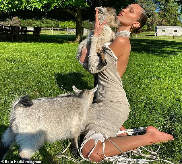 Animal lover: Bella Hadid poses with baby goats on her mother Yolanda's farm in Pennsylvania. She spent the majority of her quarantine with her sister Gigi and her baby-daddy Zayn