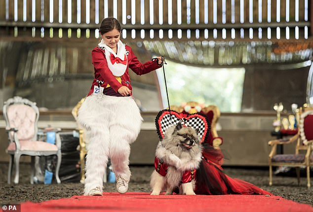MeanwhileLily Blathorn with Keisha the Keeshond dog, dressed as the White Rabbit and Queen of Hearts to walk the runway