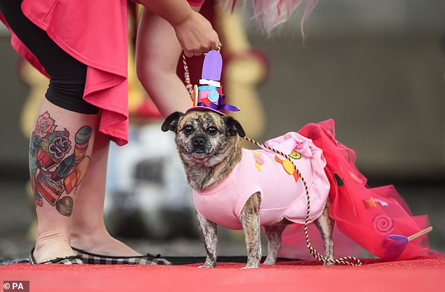 Others wore bold and bright costumes with enormous trains and colourful hats on the runway in Yorkshire