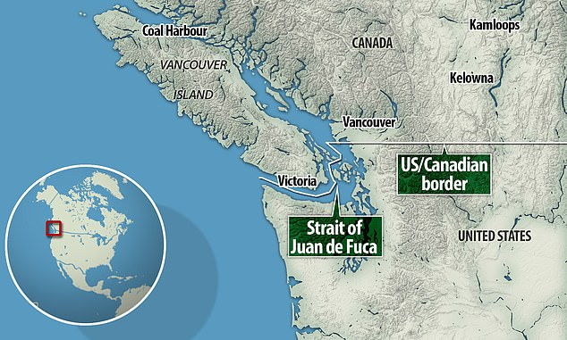 The 21 year-old orca — or 'killer whale' — gave birth on September 4 to her new calf, dubbed 'J57' by researchers, in the eastern Strait of Juan de Fuca in US waters.