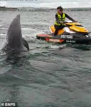 The dolphin emerges from the water