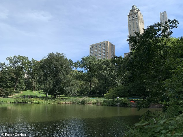The Central Park Pond, sometimes referred to as Swan Lake, is in the southeast corner of the park near The Plaza Hotel