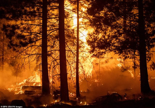 The Creek Fire blazes near Shaver Lake in Fresno County, California - destroying homes and killing at least one person