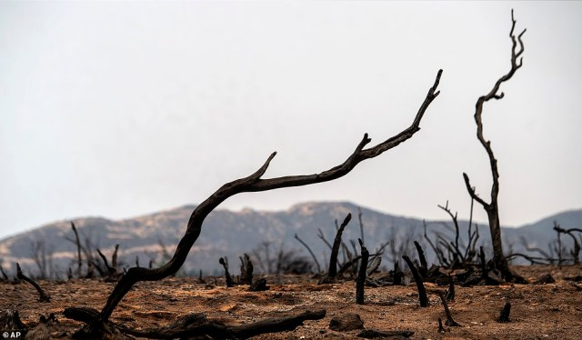 Burnt vegetation remains after the El Dorado Fire near Yucaipa on Monday - a fire started by a gender reveal party