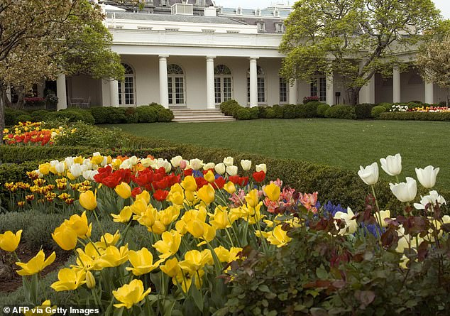 The circular patterns of the plants above have been replaced with diamond shape formations, which was the original design of Bunny Mellon's