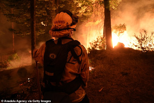 More than two million acres have been destroyed and 172,000 people left without power during a record heat wave in the drought-stricken state.Pictured the Creek Fire in Fresno County