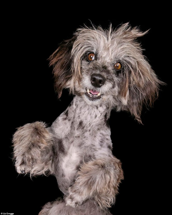 Looking good! An adorable pooch showcases its grey and brown hair. London-based Liz said the best way to make sure a photoshoot went well was to keep things spontaneous