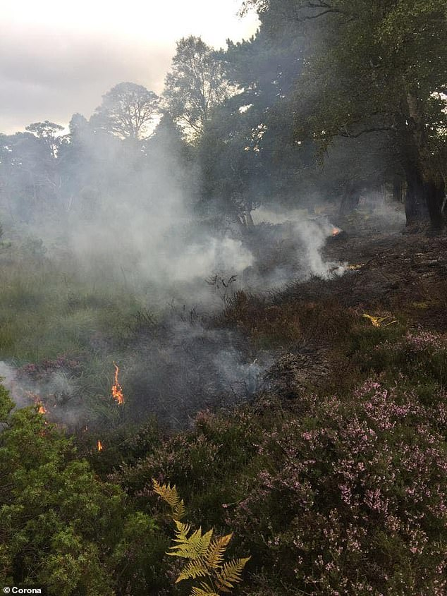 A close call: This picture posted by Rothiemurchus shows a recent camp fire near Coylumbridge, Scotland, left by tourists which could have caused a forest fire