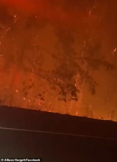 The videos showed the forest enveloped by an eerie orange glow as flames consumed dozens of trees and embers cascaded from the sky