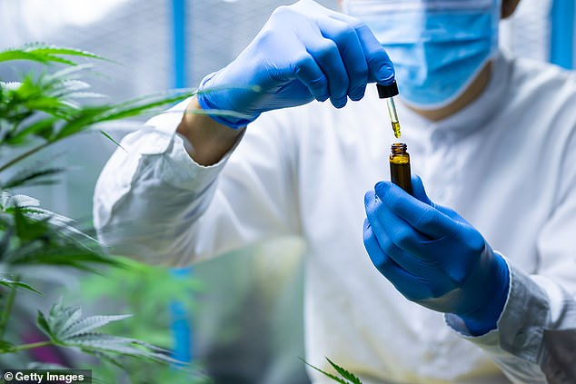 The Therapeutic Goods Administration has announced plans to amend Poisons Standard for cannabidiol to give patients easier access to the drug over the counter. Pictured: A medical expert checking a medical cannabis product