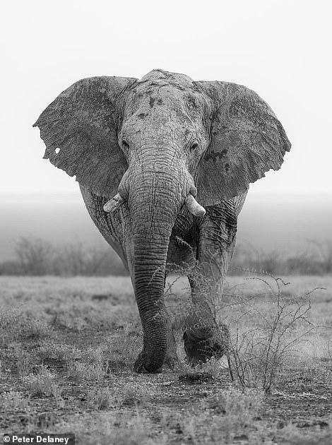 A majestic elephant in Etosha National Park