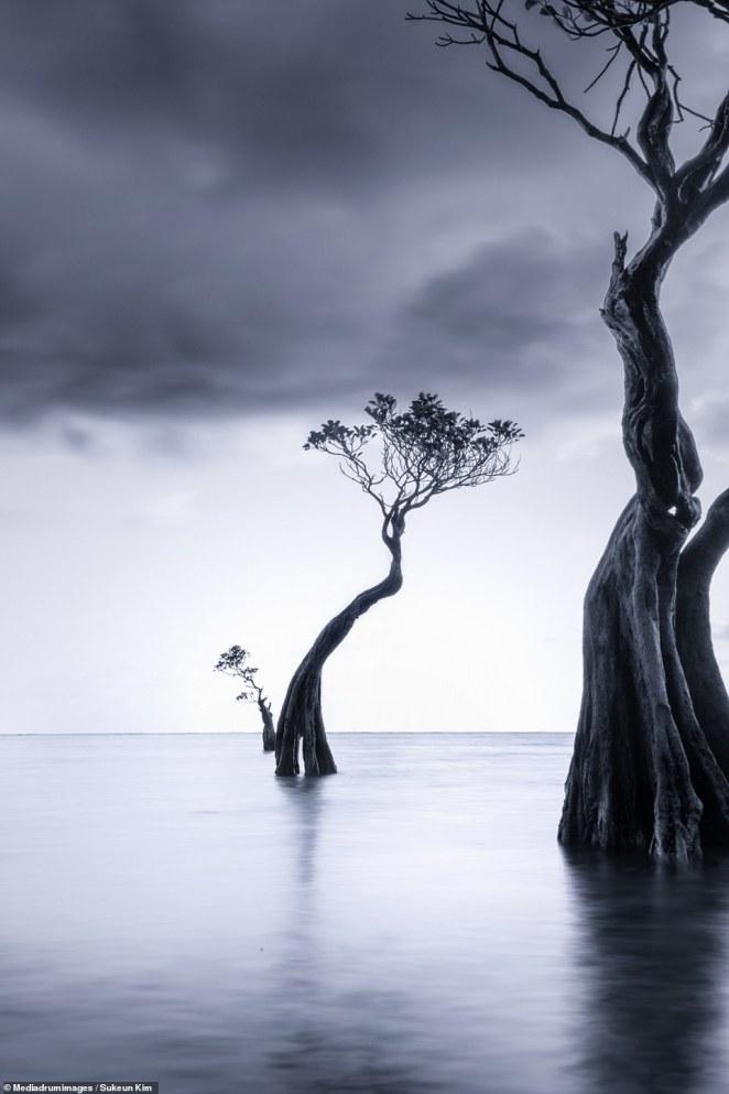 'Story of Tree Family' by Sukeun Kim. The South Korean photographer's series studies the surreal trees of Sumba Island, Indonesia
