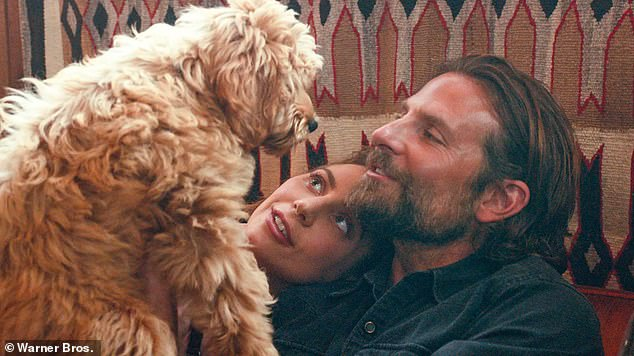 Researchers from the US studied more than 150,000 points along the labradoodle genome to determine how the breed has developed over the decades. Pictured, Bradley Cooper, his labradoodle Charlie and Lady Gaga on the set of the 2018 film 'A Star is Born'