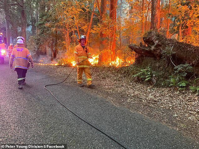 Gold Coast councillor Peter Young took pictures of his fellow volunteer firefighters battling a blaze in Springbrook in August. Mr Young has seen a new officer's report that has a 'very bleak' outlook for the future of bushfires in the region
