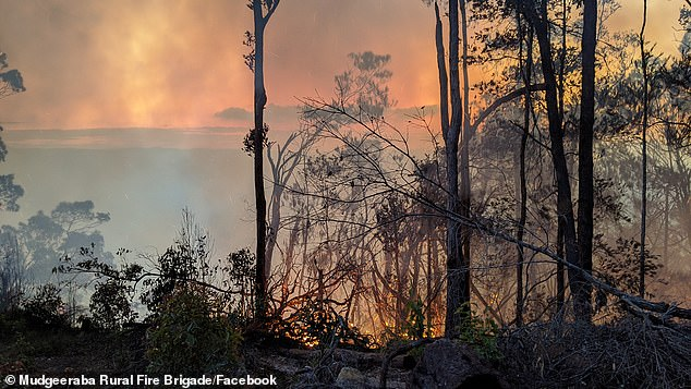 Smoke in the air during the Springbrook fire.Officials warned that failure to act will result in another 'catastrophic' bushfire season like the most recent one, which began in June 2019 and lasted until May 2020