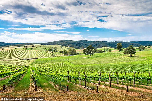 South Australia announced it would open to residents from the ACT on Tuesday, allowing eastern residents to travel to the state without spending 14-days in quarantine. Pictured: Barossa Valley