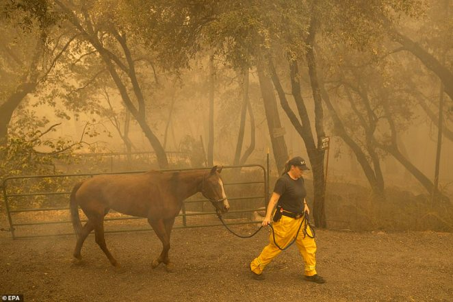 Butte County Animal Control officer Linda Newman (pictured) retrieves a horse left behind during the Bear Fire in California that has killed at least 10 people so far