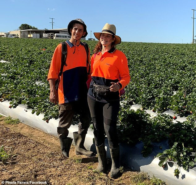 The government will also consider allowing people to remain on JobSeeker payments if they complete regional work during harvest season (stock image)