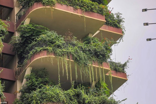 The plants have been almost completely swallowed by some neglected balconies, with branches hanging on the railings at the towers.