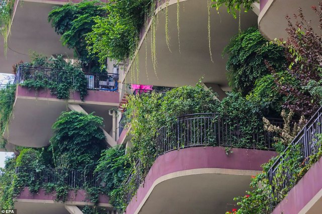 When the project was built in 2018, each balcony was given space to grow its own plants but they are now overrun, with branches hanging down on the balcony below