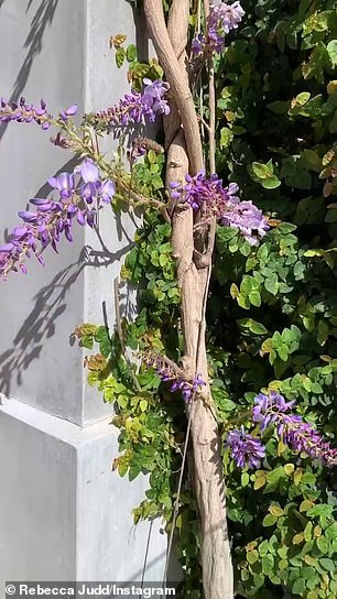 Wisteria hysteria! Lastly, she showed off a wisteria vine next to her pool, explaining that was 'so excited' that the plant was finally blossoming after being cut back for renovations