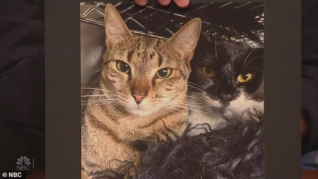 Rescue cats:Seth showed off photos of Wendy's rescue cats, a black tabby called Chit Chat and a tiger-striped feline named My Way. He noted that they sounded like Kentucky Derby names