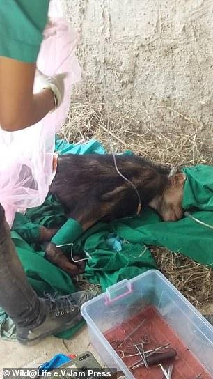 Caita undergoes and operation