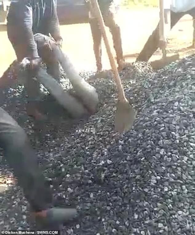 A worker pulls the stricken man's legs while another shovels gravel off him in Kenya's capital
