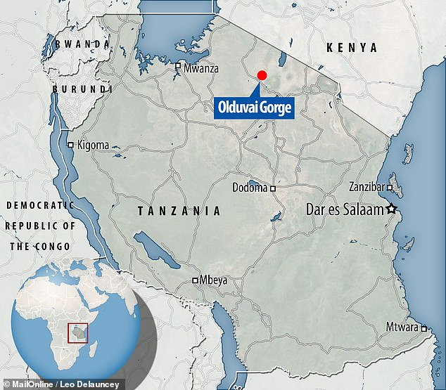 The Olduvai Gorge in northern Tanzania has produced some of the oldest remains of early human ancestors known to date, along with some of the tools they used