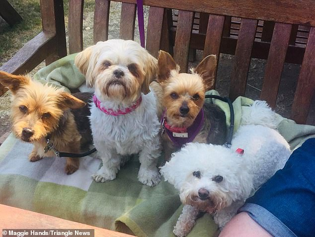 Three of Maggie's dogs have been struck down out of her pets here, Lucy, Kiki, Jess and Minnie