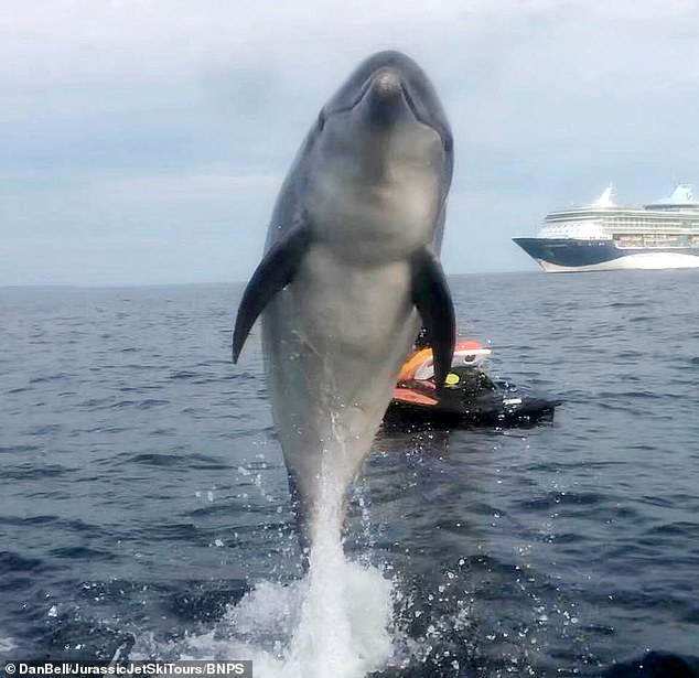 I'm having some dol-fun: Danny the dolphin leaps from the English Channel off Weymouth