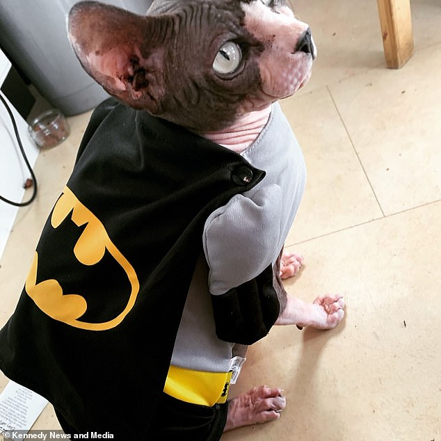It's Bat Cat! On top of gluten free dinners, bubble baths and massages, The Sphynx cat even has his own superhero costume.