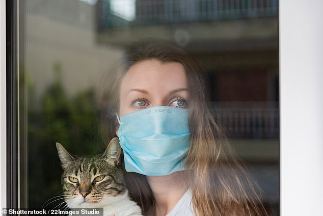 Pet owners infected with COVID-19 are at risk of spreading the virus to their cats and dogs — whom can also end up with respiratory systems — a study has found (stock image)