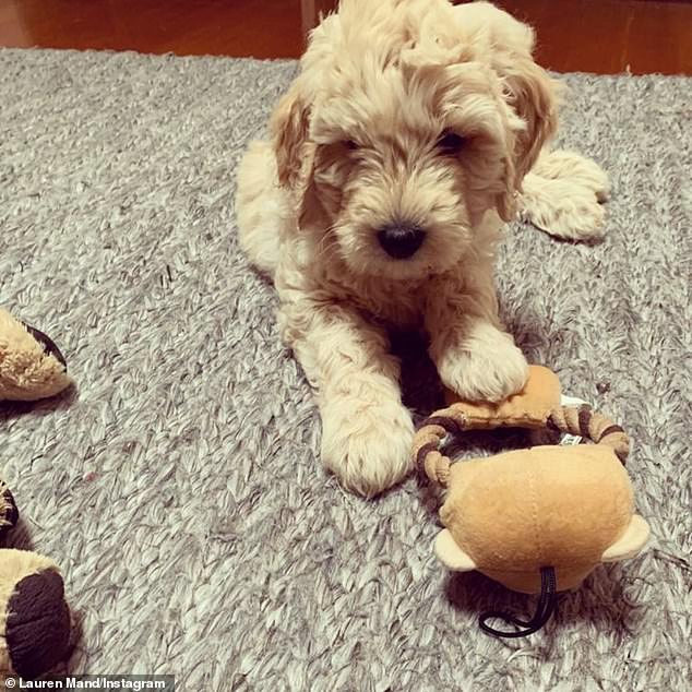 Welcome! In a separate post, Lauren, 31, also shared a photo of the sweet pup and the exciting news. She wrote: 'She made it!! Welcome to the team Kensi. Let the adventures begin. #kensithegroodle @jrb03'