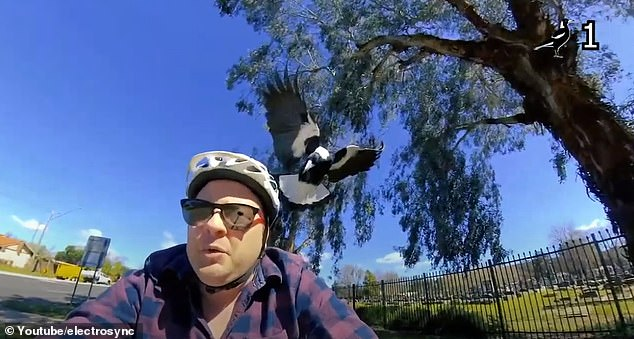 Youtuber Alister Laidlaw, based in NSW, tested the best helmet attachments to deter swooping magpies in his latest video (pictured)