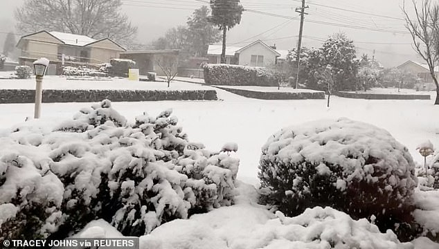 Central NSW could see some snow in the coming days. Pictured is the town of Oberon on August 22 when it saw 22cm of snow