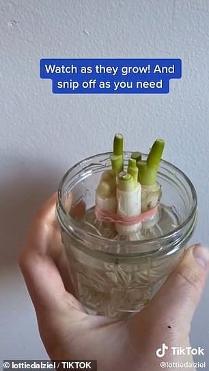 The spring onions will regrow from the stems over time and the same method can be implemented each time