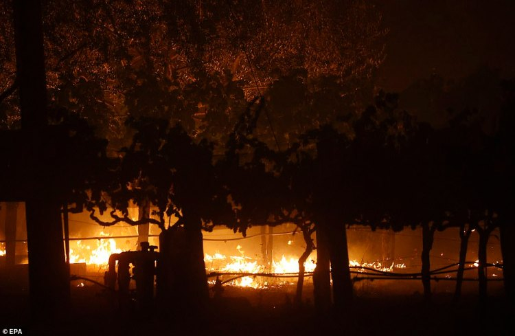 The lovingly-tended grapes, producing Cabernet Sauvignon and Cabernet Franc wines, went up in smoke on Sunday