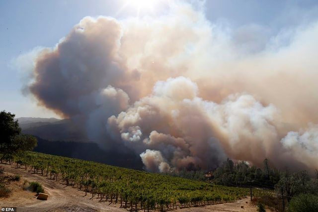 Vines from the Viader Vineyards were engulfed in smoke on Sunday afternoon as the Glass Fire blazed out of control